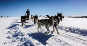 Norway, Oslo, dog sledding, sledging, husky, tours, tourism, experiences, winter, Nordic, Scandinavia, snow