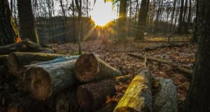 forest, wood, residue, fuel, aviation, planes, flights, Lulea, university, research, money, grant