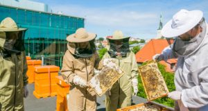 Nordic Hotel Forum, roof, bees, hives, honey, fresh, food, environment, Estonia, Tallinn, parks, pollen, green, initiatives, Green Key