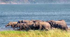 Sri Lanka, elephants, tourism,